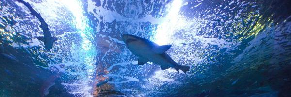 Aquarium San Sebastian, ซานเซบัสเตียน
