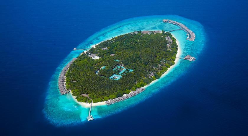 Dusit Thani Maldives 5* снорклинг с морскими черепахами