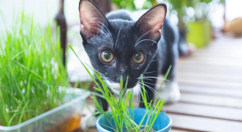 pet friendly,ที่พักสัตว์เลี้ยงพักได้,booking.com,ที่พักหมาพักได้,ที่พักแมวพักได้,ที่พักน้องหมา,ที่พักสำหรับสัตว์เลี้ยง
