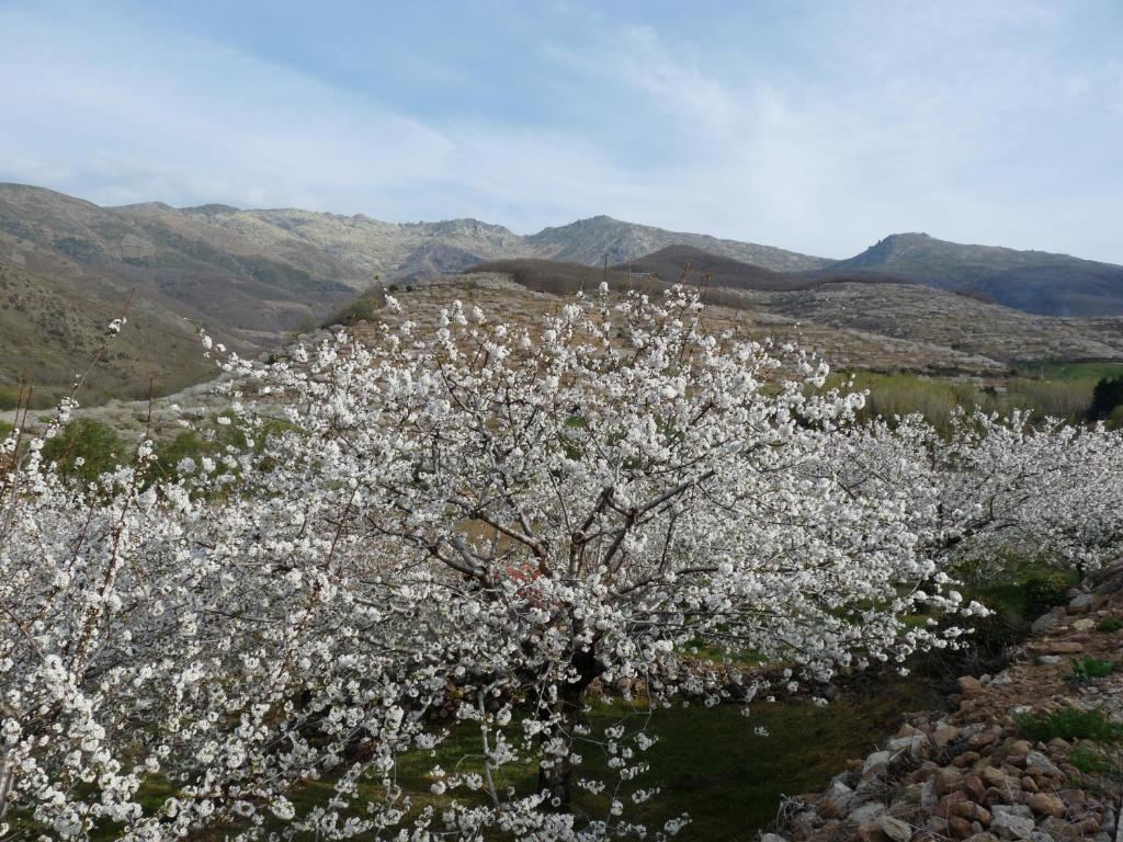 hotels with  charm in cáceres provincia 63